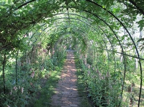 花樹のトンネル.jpg